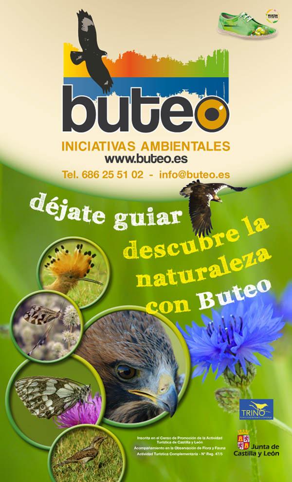 buteo-kache
